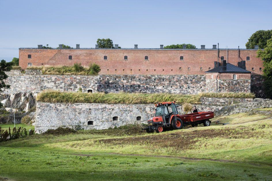Työntekijä tekee heinätöitä, taustalla näkyy suomenlinnan muuria